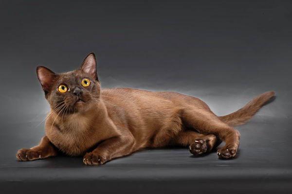 поведение кошек при знакомстве